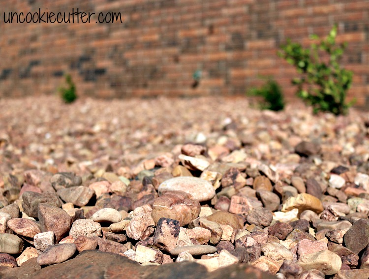 How we DIY'ed our Rock Garden for a maintenance free courtyard - UncookieCutter.com